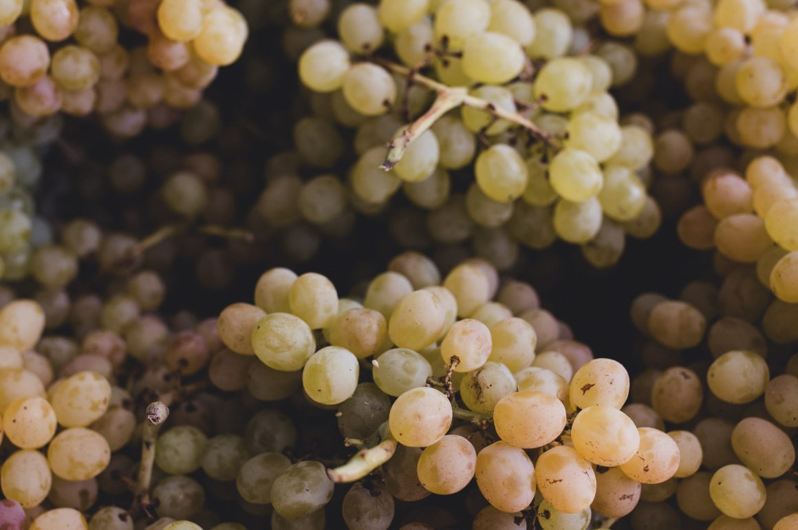 The Difference Between Table Grapes and Wine Grapes